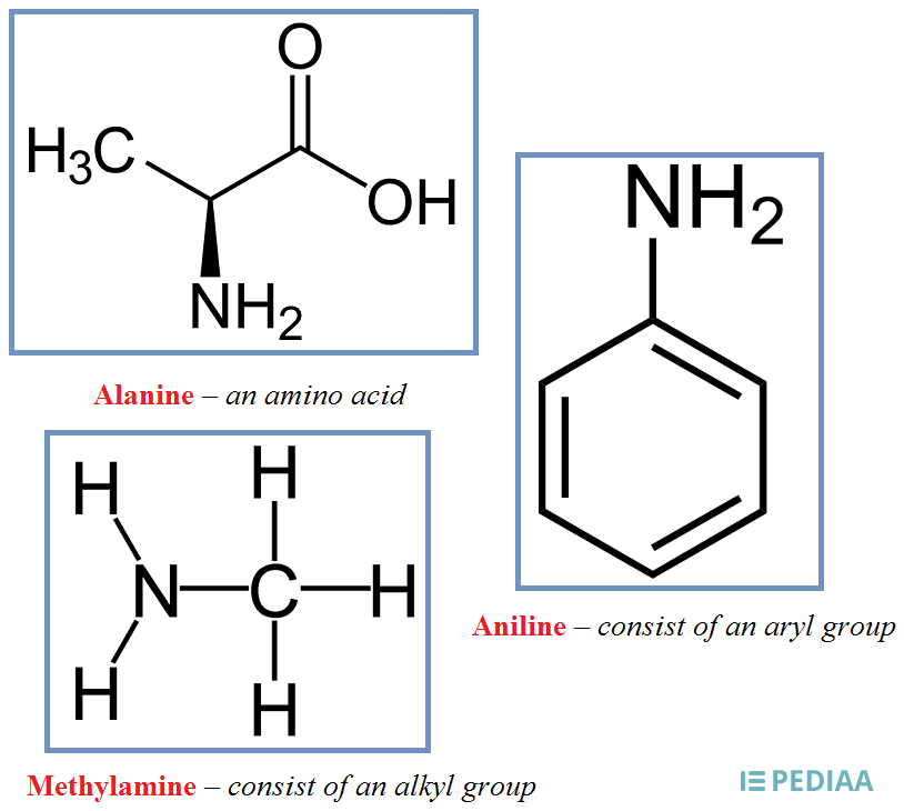 Difference Between Primary Secondary and Tertiary Amines