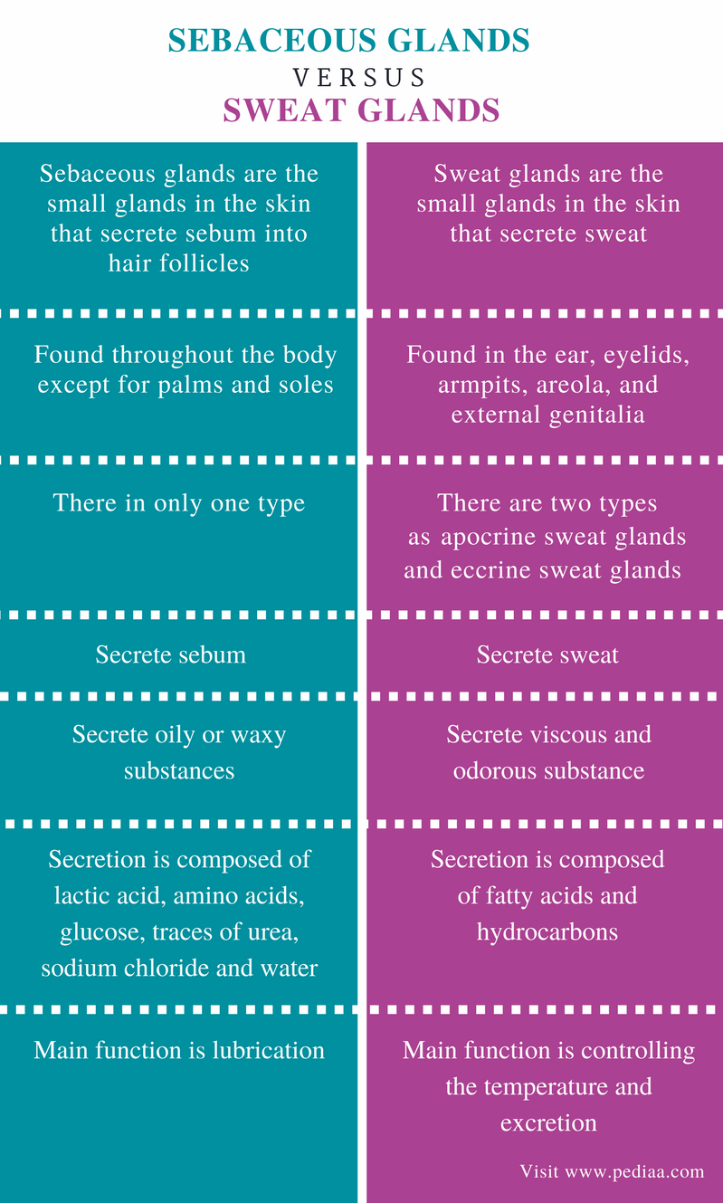 Difference Between Sebaceous Glands and Sweat Glands - Comparison Summary