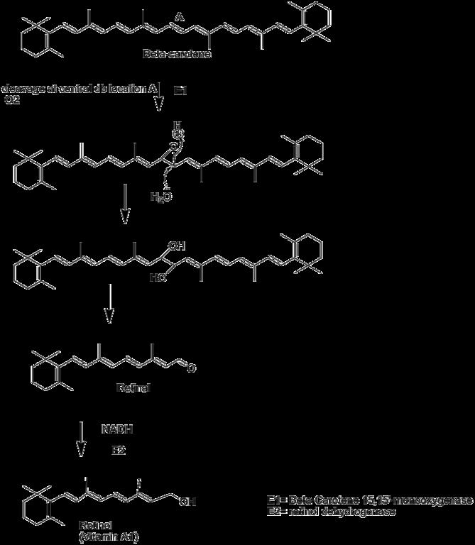 Main Difference - Vitamin A vs Beta Carotene
