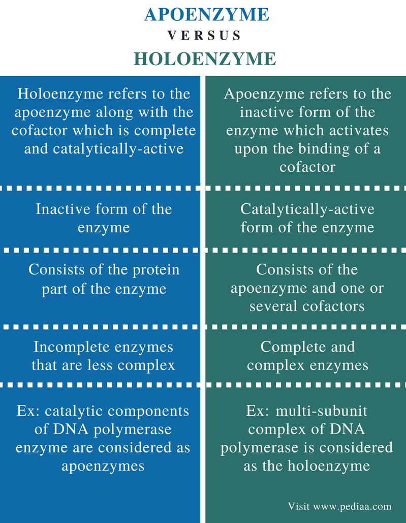 Difference Between Apoenzyme and Holoenzyme - Comparison Summary