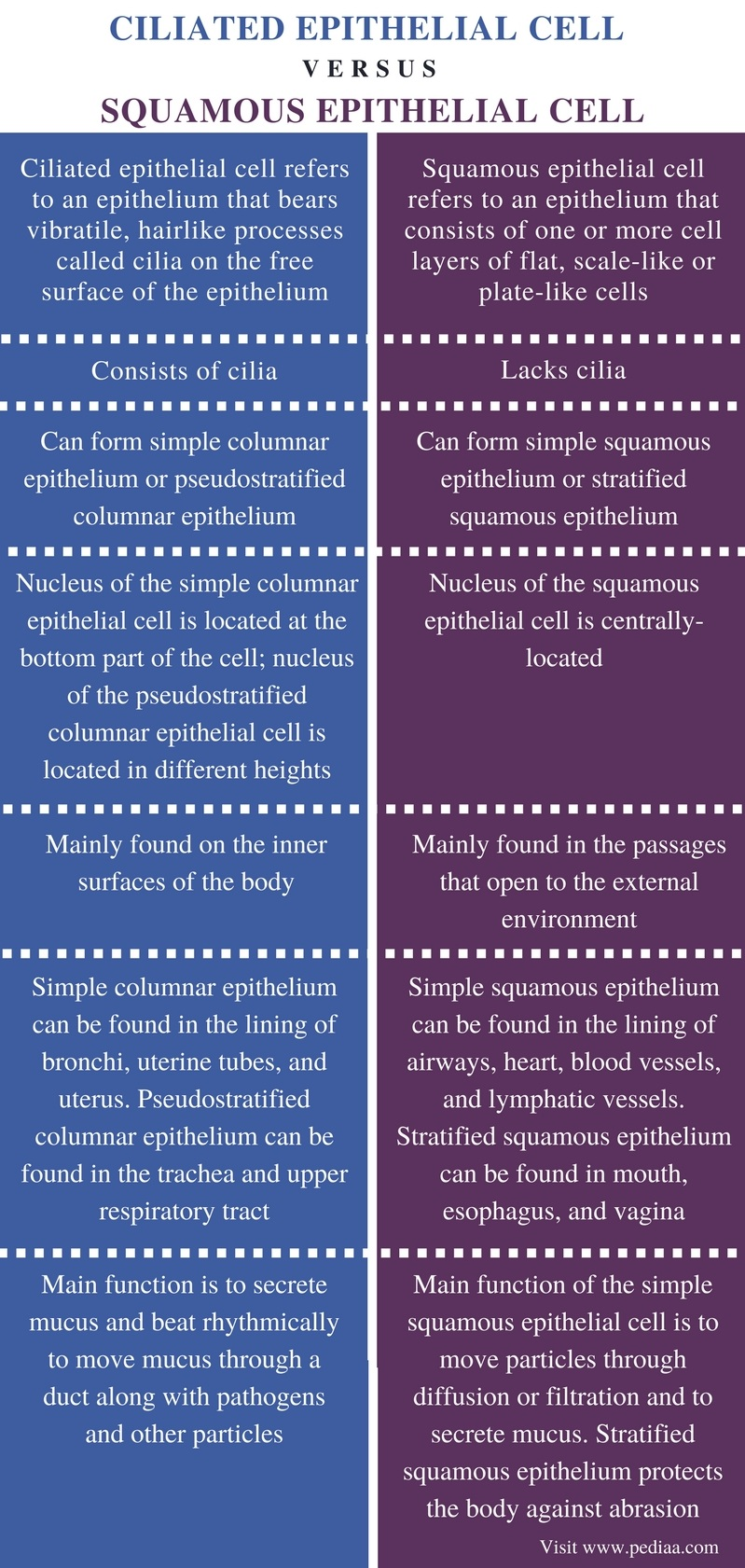 Difference Between Ciliated Epithelial Cell and Squamous Epithelial Cell - Comparison Summary