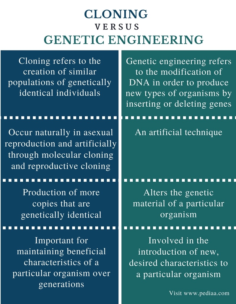 Difference Between Cloning and Genetic Engineering - Comparison Summary