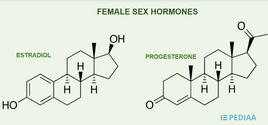 Main Difference - Estrogen vs Progesterone