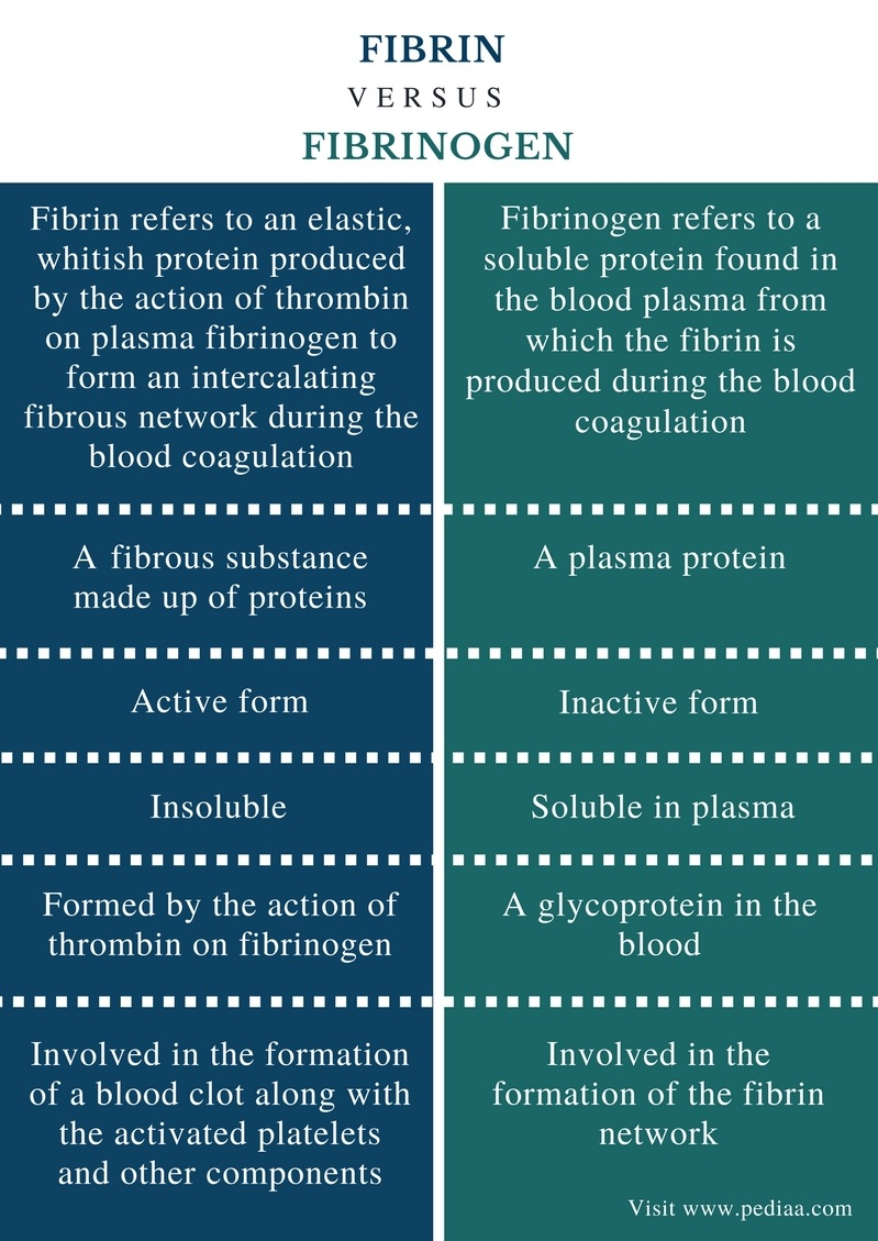 Difference Between Fibrin and Fibrinogen - Comparison Summary