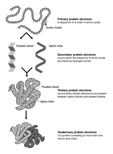 Difference Between Gene and Protein - Figure 3