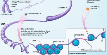 Difference Between Genetics and Epigenetics