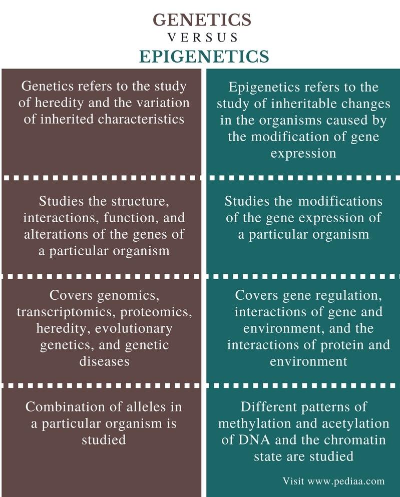 Difference Between Genetics and Epigenetics - Comparison Summary