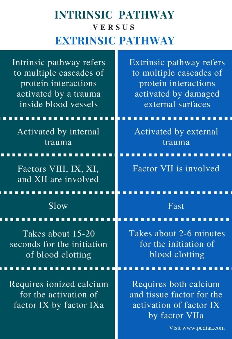 Difference Between Intrinsic and Extrinsic Pathway in Blood Clotting - Comparison Summary