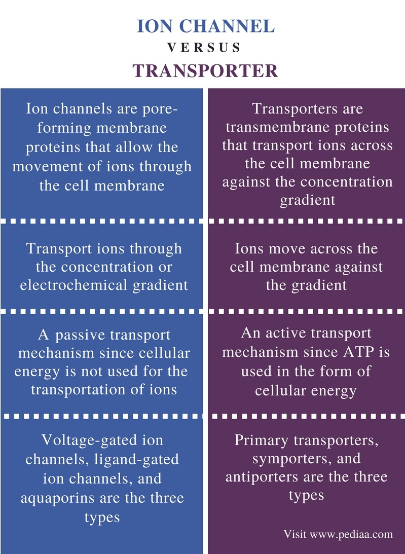 Difference Between Ion Channel and Transporter - Comparison Summary