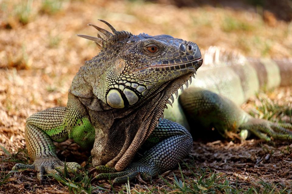 Main Difference - Mammals vs Reptiles