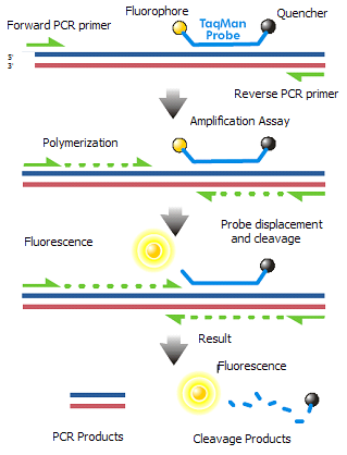 Difference Between PCR and QPCR