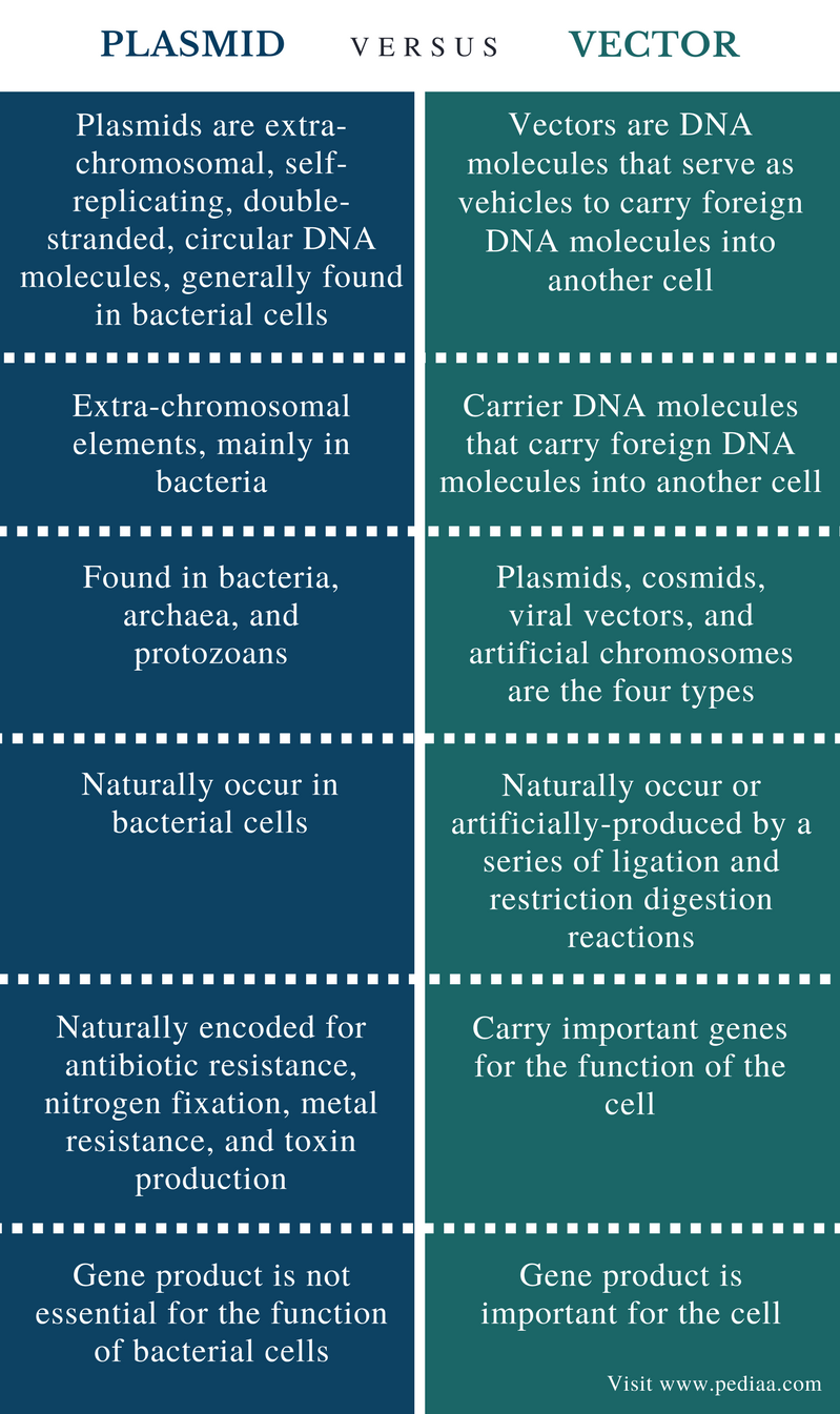 Difference Between Plasmid and Vector - Comparison Summary
