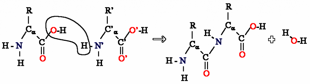 Difference Between Polyamide and Polyimide