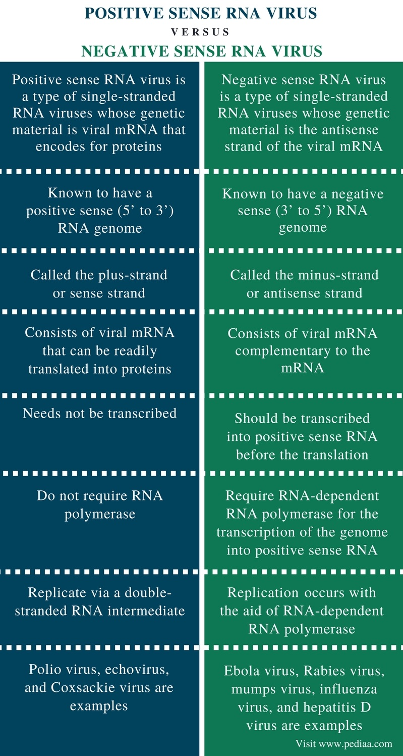 Difference Between Positive and Negative Sense RNA Virus - Comparison Summary
