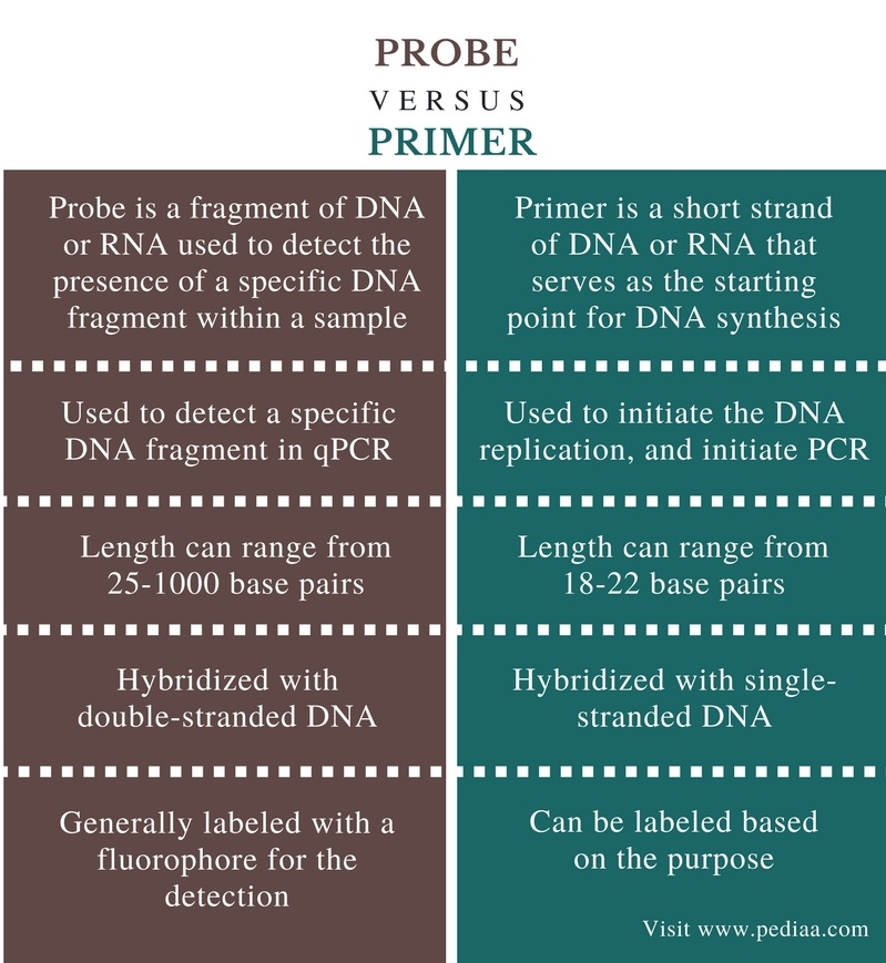 Difference Between Probe and Primer - Comparison Summary
