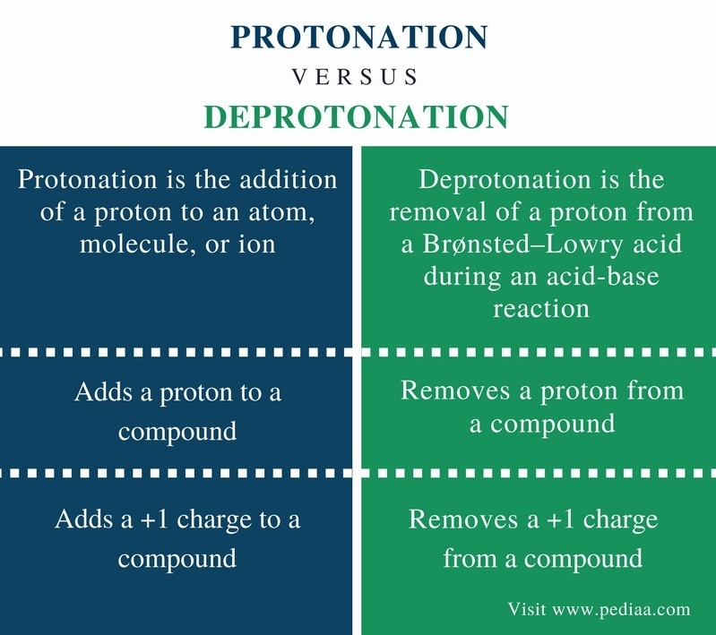 Difference Between Protonation and Deprotonation - Comparison Summary
