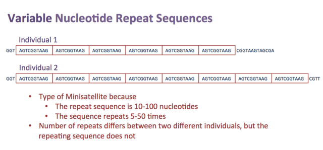 Main Difference - Repetitive DNA vs Satellite DNA