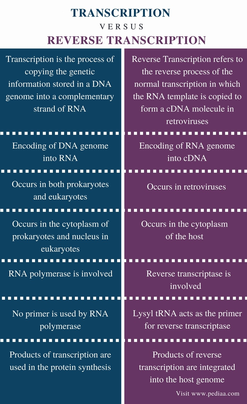 Difference Between Transcription and Reverse Transcription - Comparison Summary