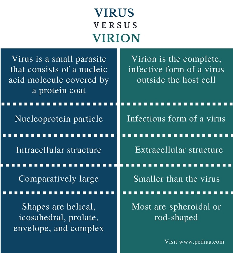 Difference Between Virus and Virion - Comparison Summary