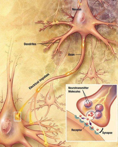 How Do Neurons Communicate With Each Other