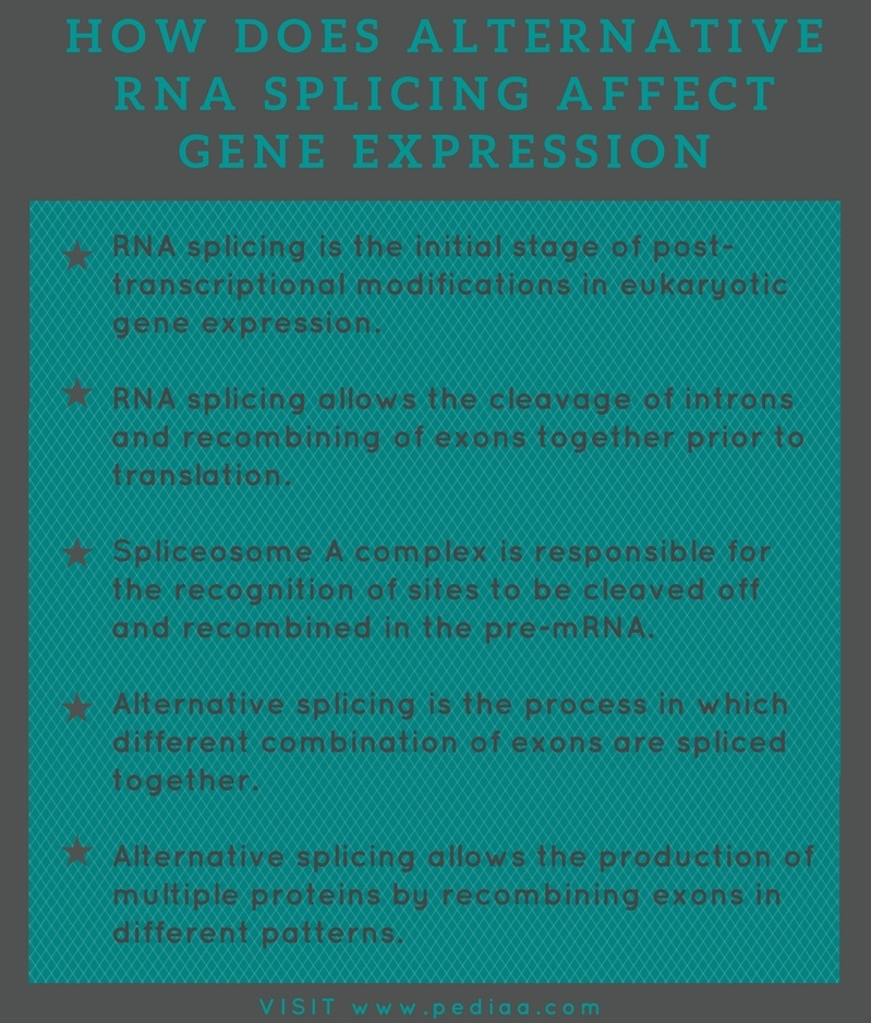 How Does Alternative RNA Splicing Affect Gene Expression
