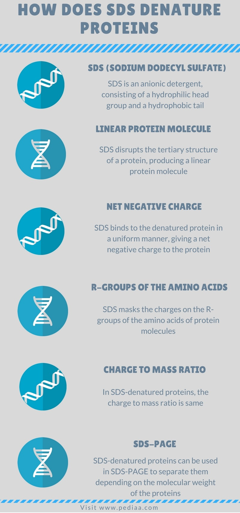 How Does SDS Denature Proteins - Infograph