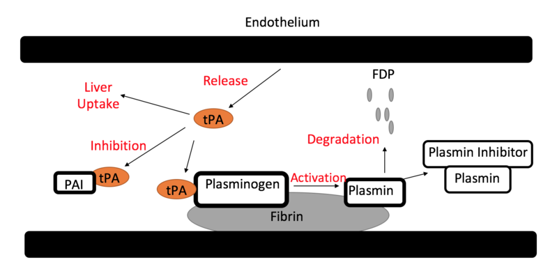 How Does Tissue Plasminogen Activator Work_Figure 2