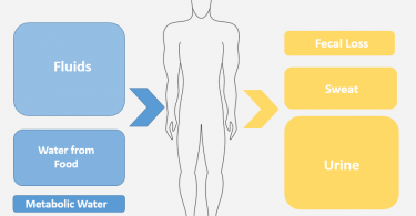 How Does the Body Maintain Water Balance