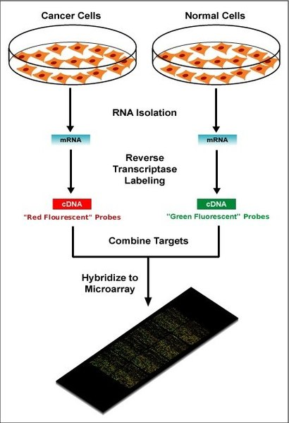 How are DNA Microarrays Used in the Study of Genomics_Figure 2
