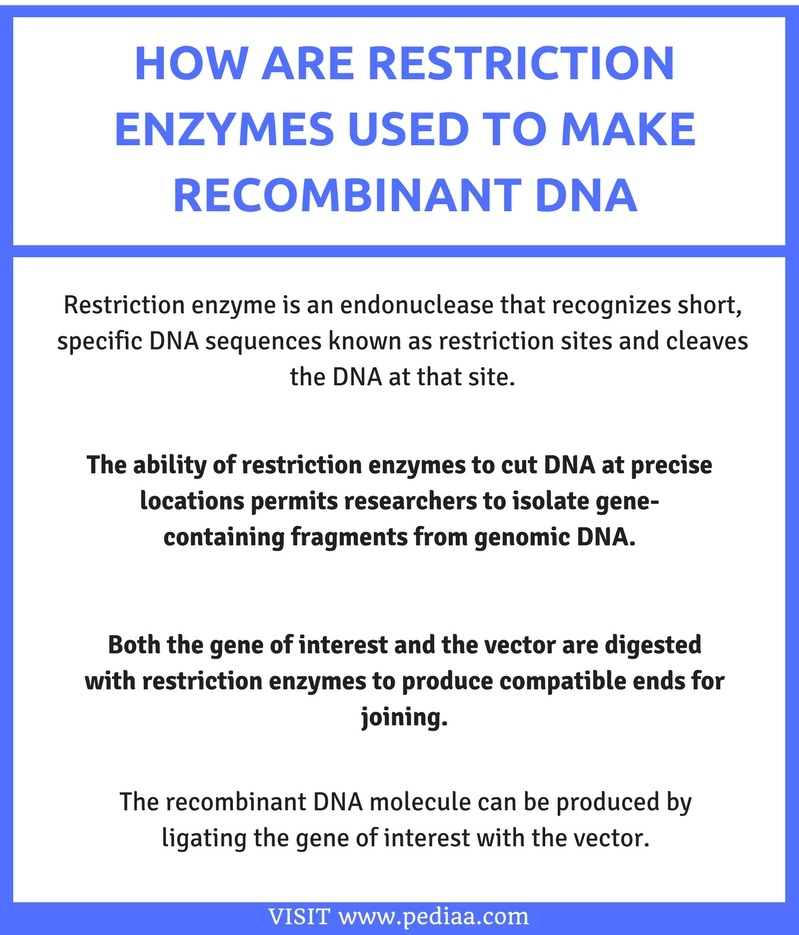 how are restriction enzymes used to make recombinant dna pediaa com