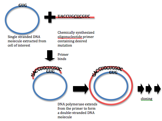 How to Design Primers for Site Directed Mutagenesis_Figure 1
