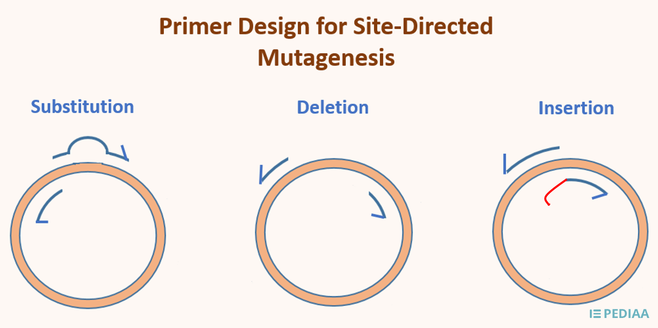 How to Design Primers for Site Directed Mutagenesis