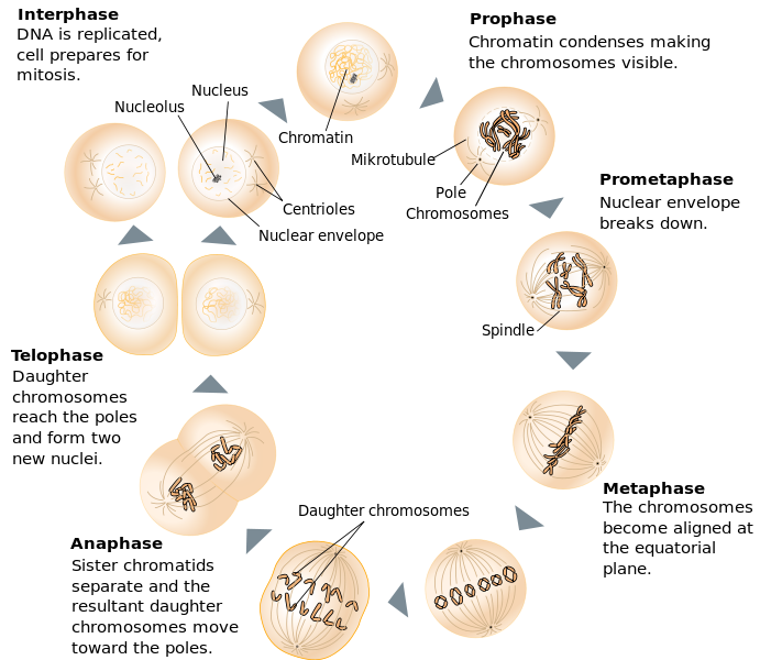 type of cells