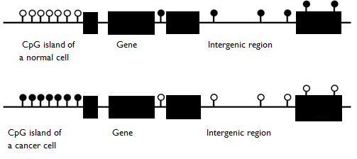 What is the Effect of DNA Methylation on Gene Expression_Figure 3
