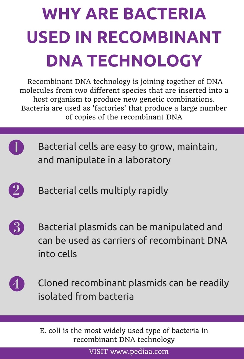 Why are Bacteria Used in Recombinant DNA Technology