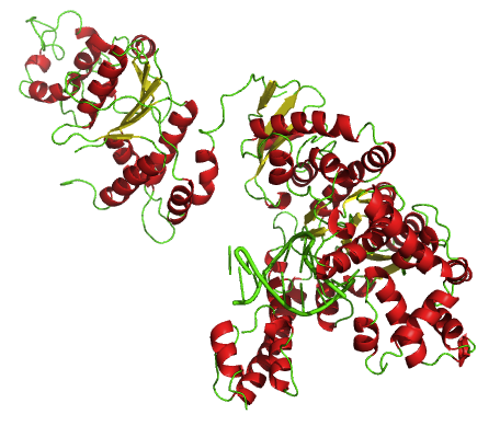 Why is Taq Polymerase Thermostable_Figure 1