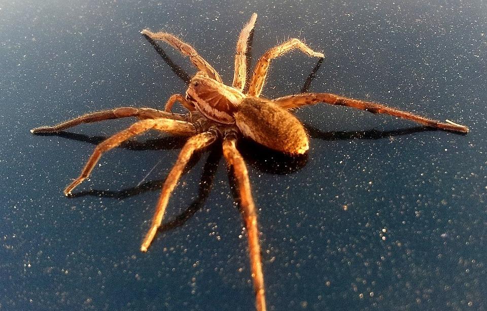 Main Difference - Arachnids vs Crustaceans