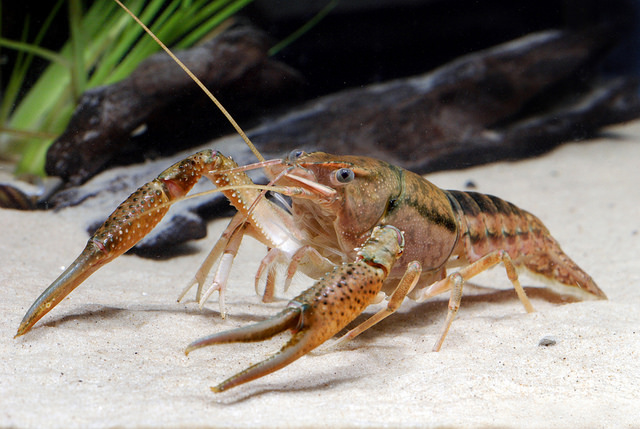 Difference Between Arachnids and Crustaceans