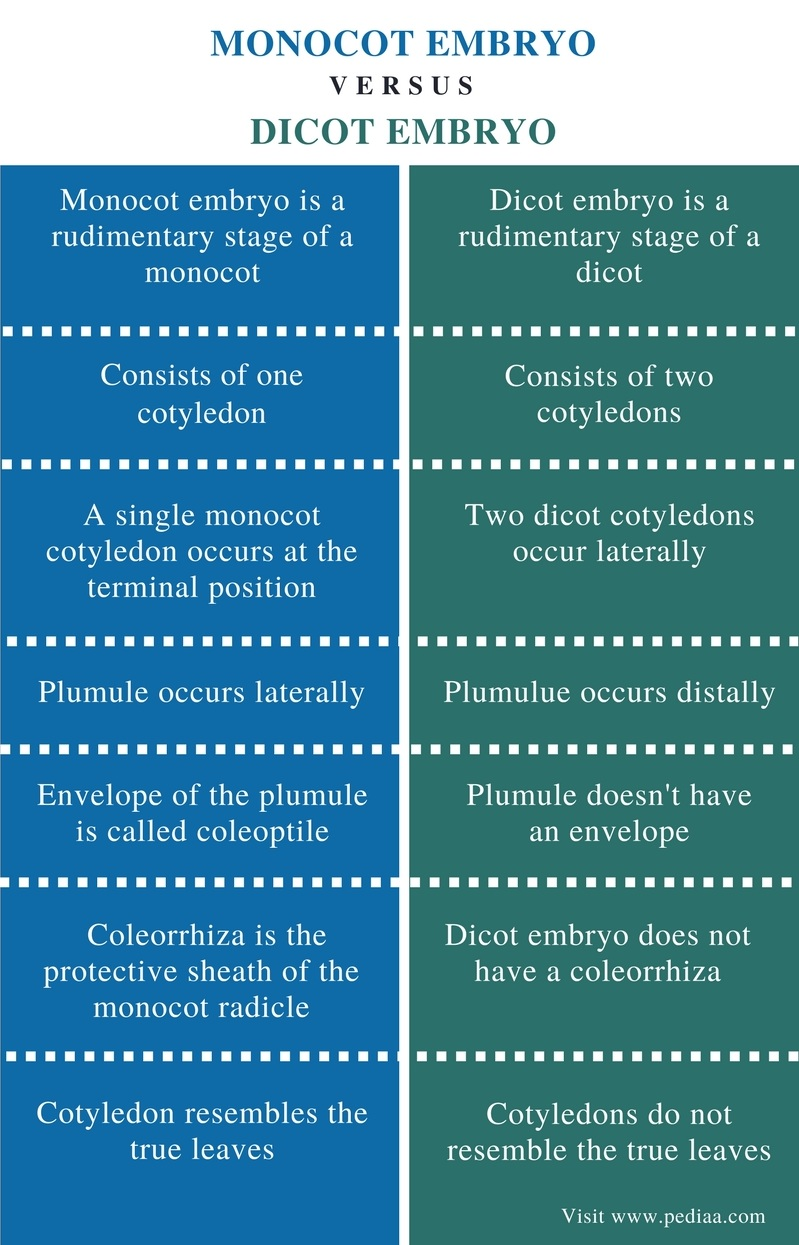 Difference Between Monocot and Dicot Embryo - Comparison Summary