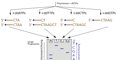 How Does DNA Sequencing Work _Figure 2