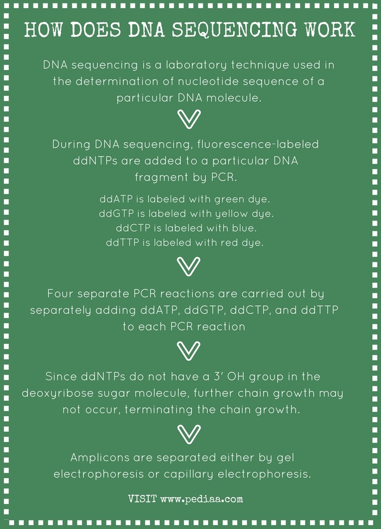 How Does DNA Sequencing Work - Infographic
