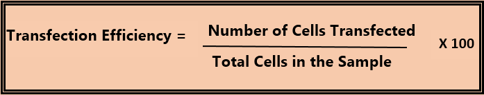 How to Calculate Transfection Efficiency_Figure 2
