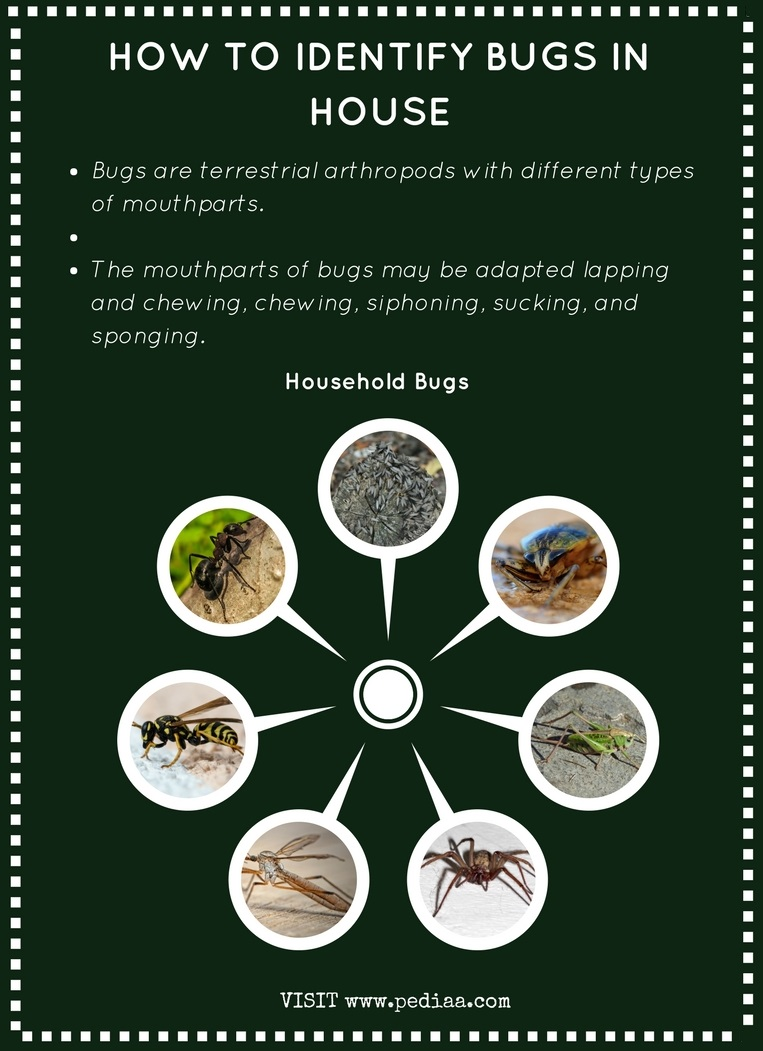 How to Identify Bugs in House - Infograph