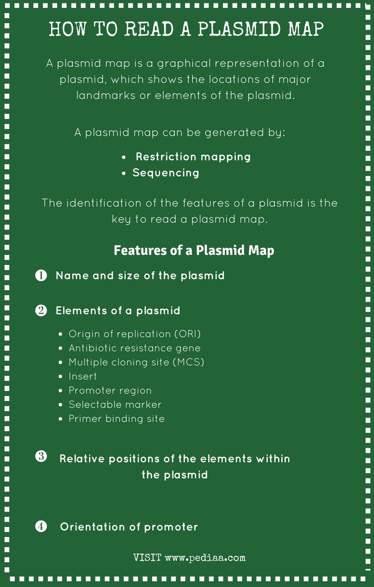 How to Read a Plasmid Map_Infographic