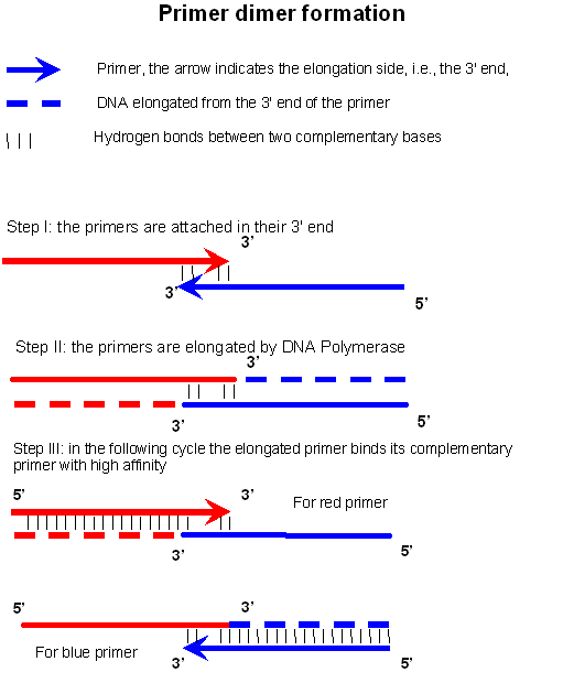 How to Design Primers for QPCR