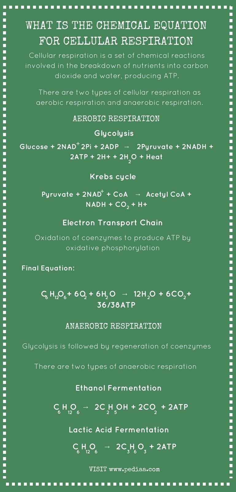 What is the Chemical Equation for Cellular Respiration - Infographic
