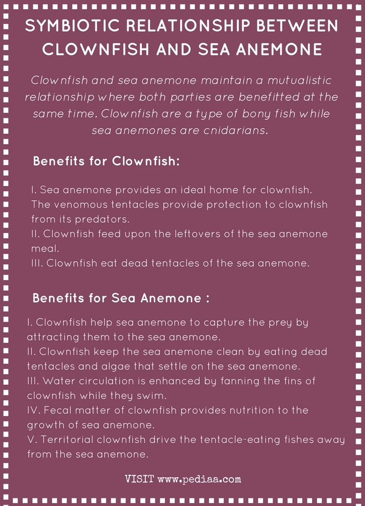 What is the Symbiotic Relationship Between Clownfish and Sea Anemone- Infograph