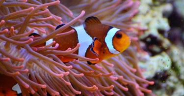 What is the Symbiotic Relationship Between Clownfish and Sea Anemone