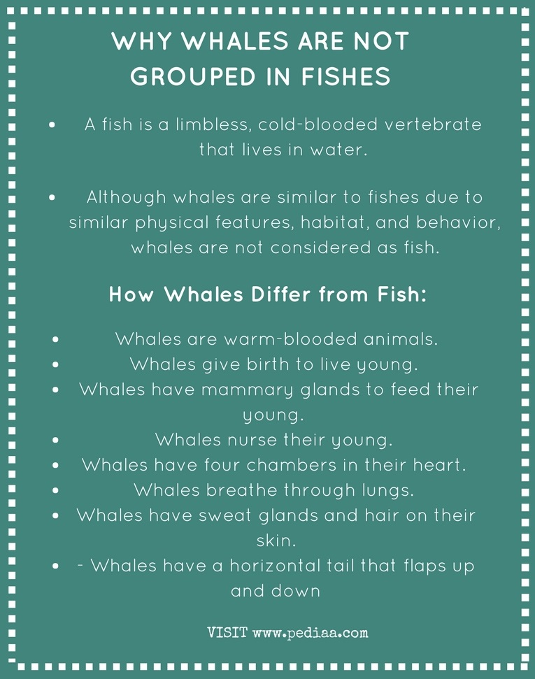 Why Whales are Not Grouped in Fishes - Infographic