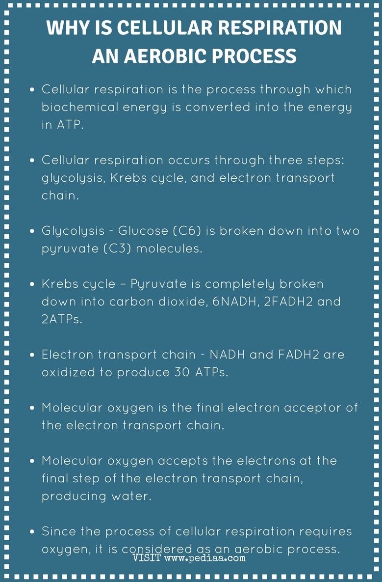 Why is Cellular Respiration an Aerobic Process - Infographic